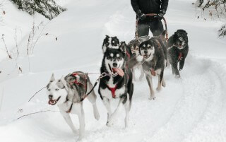 mushing-course