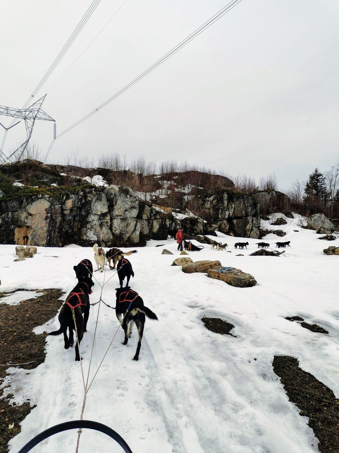 Traîneau à chiens au printemps chez Kinadapt
